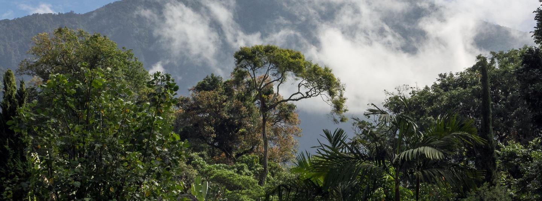 Bäume für Bali