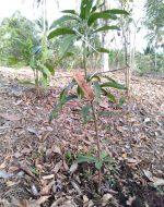 Trees4Bali-5552423