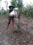Trees4Bali-555645